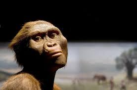 Lucy the Australopithecus Turns 41 (Plus 3.2 Million Years) | Smart News |  Smithsonian Magazine